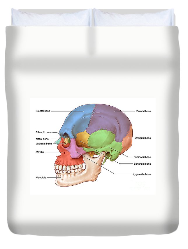 Lateral Skull Illustration Duvet Cover For Sale By Evan Oto