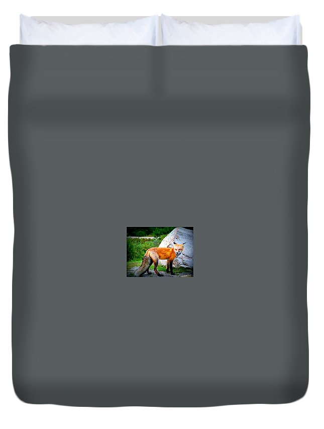 Nature Duvet Cover featuring the photograph Laughing Fox by Thomas Comeau