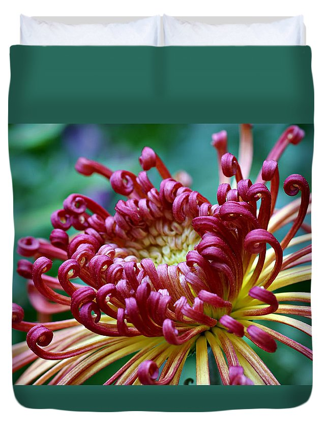 Chrysanthemum Duvet Cover featuring the photograph Lava Chrysanthemum by Nikolyn McDonald