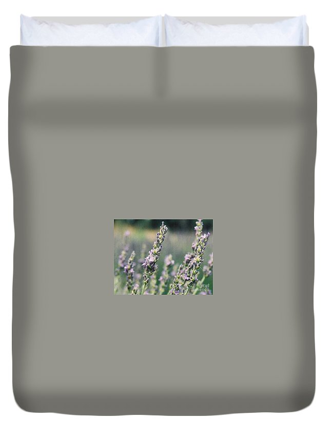 Flowers Duvet Cover featuring the painting Lavender by Eric Schiabor