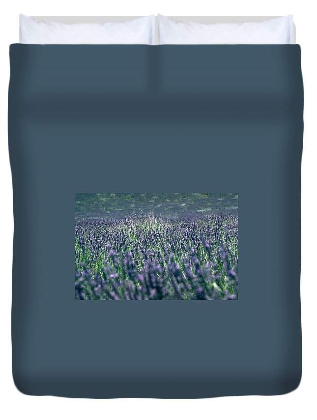 Lavender Duvet Cover featuring the photograph Lavender by Flavia Westerwelle