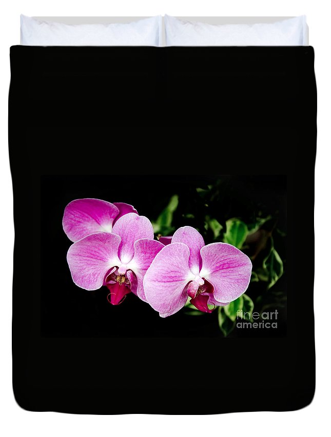 Lavender Orchids Duvet Cover featuring the photograph Lavender Orchids by Andee Design