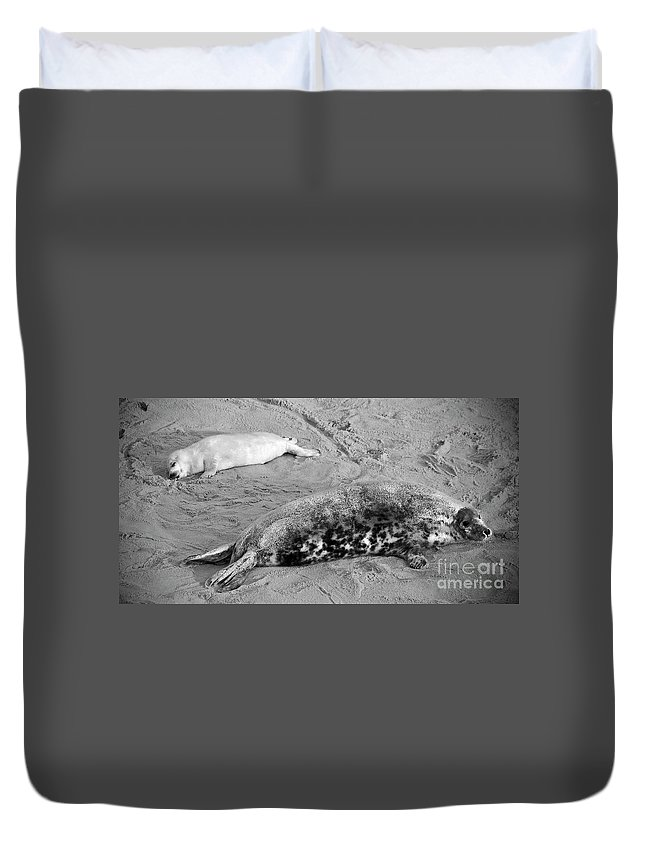 Seal Duvet Cover featuring the photograph Lazy Days by Darren Burroughs