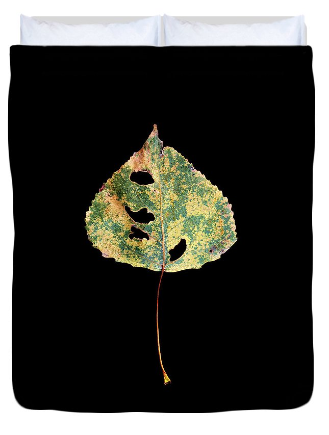 Leaves Duvet Cover featuring the photograph Leaf 25 by David J Bookbinder