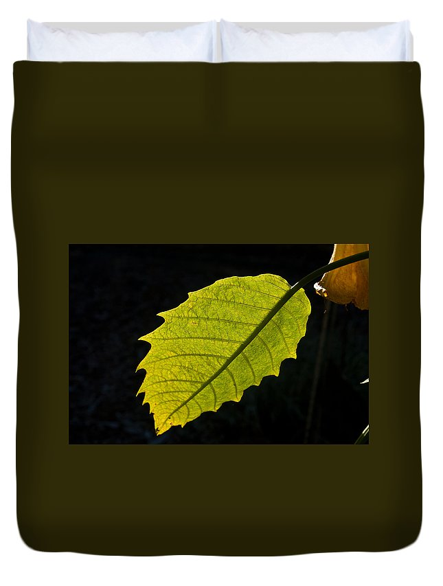 Cumberland Duvet Cover featuring the photograph Leaf Aglow by Douglas Barnett