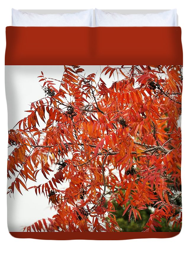 Duvet Cover featuring the photograph Leafs006 by Jeff Downs