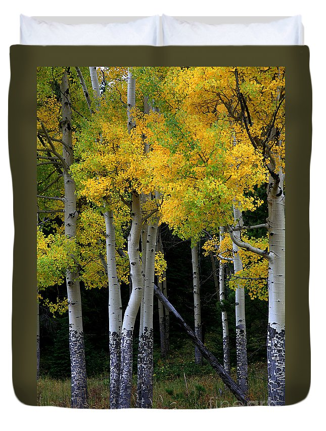 Aspens Duvet Cover featuring the photograph Leaning Aspen by Timothy Johnson
