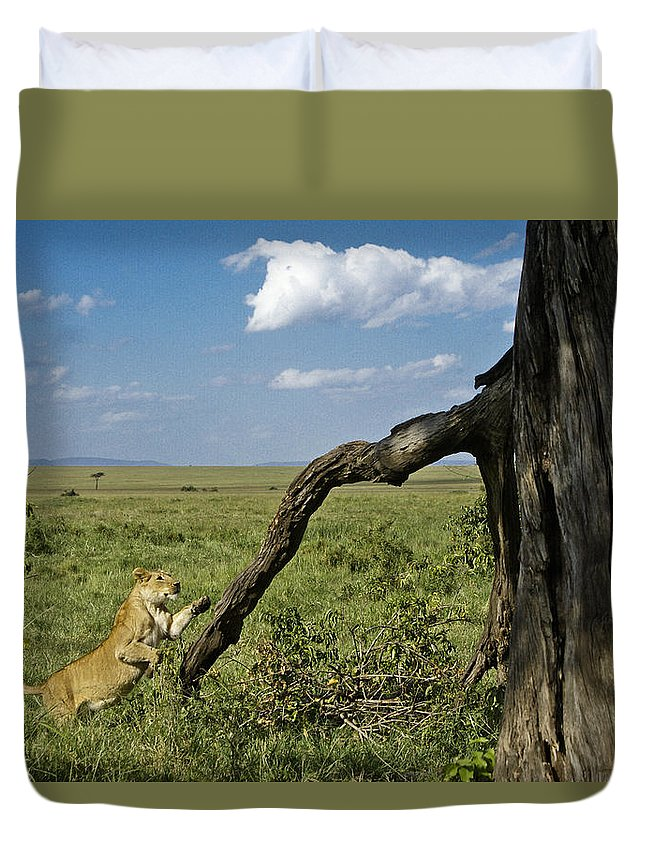 Africa Duvet Cover featuring the photograph Leaping Lion by Michele Burgess