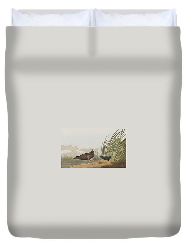 Least Water Hen Duvet Cover featuring the painting Least Water Hen by John James Audubon
