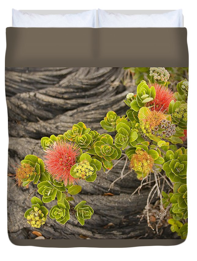 Beginning Duvet Cover featuring the photograph Lehua Flower by Ron Dahlquist - Printscapes