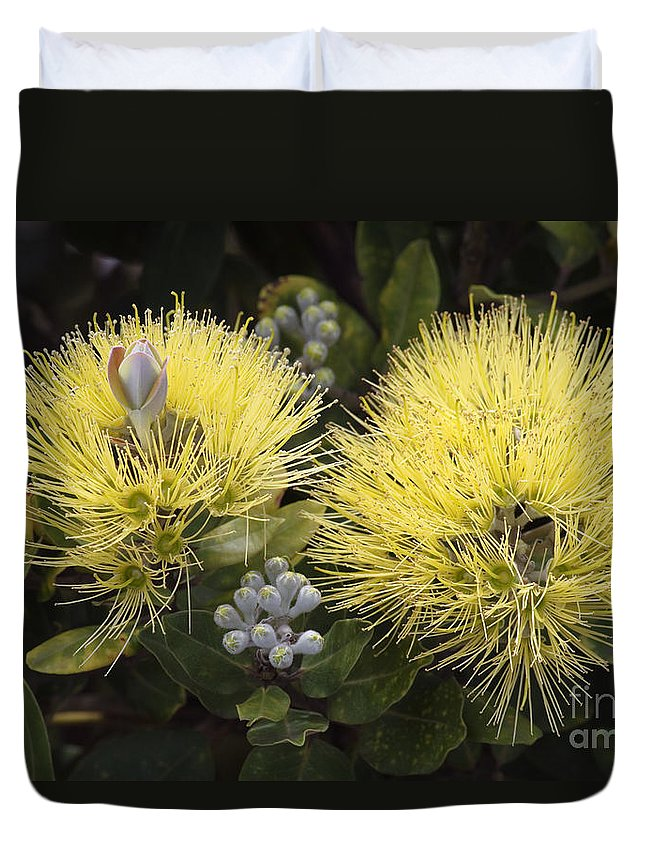 Bloom Duvet Cover featuring the photograph Lehua Mamo Blossom by Greg Vaughn - Printscapes