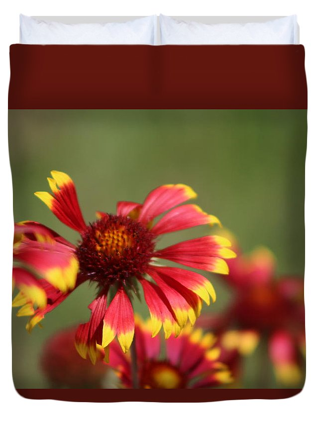 Coneflower Duvet Cover featuring the photograph Lemon Yellow and Candy Apple Red Coneflower by Colleen Cornelius