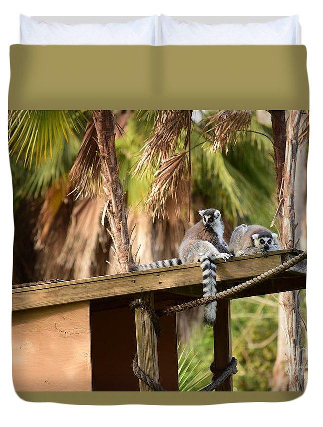 Ring Tailed Lemur Duvet Cover featuring the photograph Lemur Couple by Tarun Jain