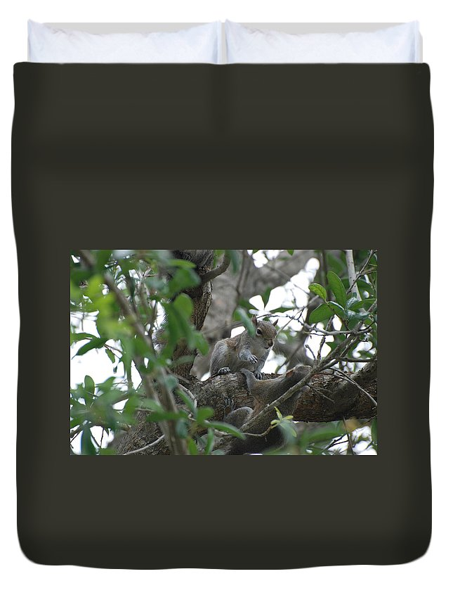 Squirrel Duvet Cover featuring the photograph Lending A Helping Hand by Rob Hans