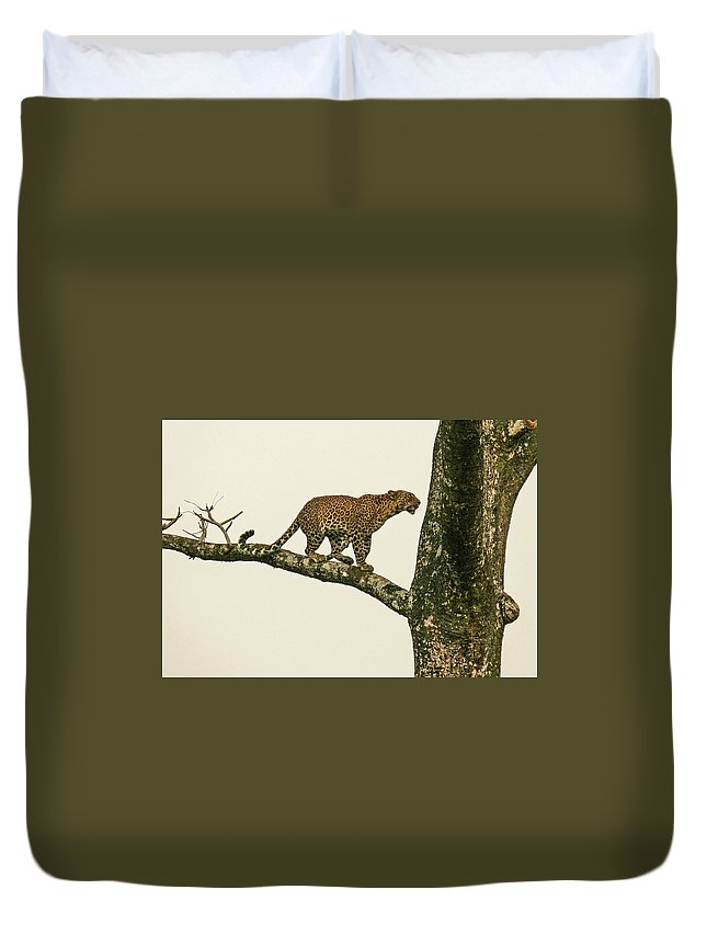 Leopard Duvet Cover featuring the photograph Leopard In A Sal Tree by Elizabeth Hershkowitz
