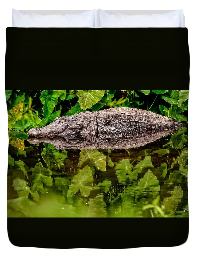 Alligator Duvet Cover featuring the photograph Let Sleeping Gators Lie by Christopher Holmes