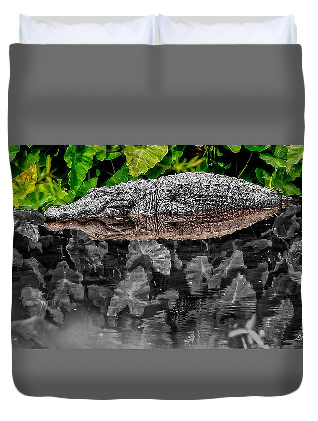 American Duvet Cover featuring the photograph Let Sleeping Gators Lie - Mod by Christopher Holmes