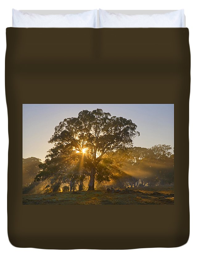 Tree Duvet Cover featuring the photograph Let There Be Light by Mike Dawson