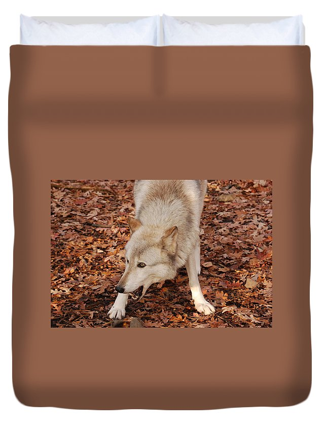 Wolf Duvet Cover featuring the photograph Lets Play by Lori Tambakis