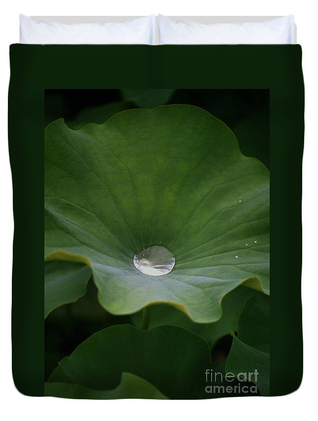 Plant Duvet Cover featuring the photograph Life by Richard Rizzo