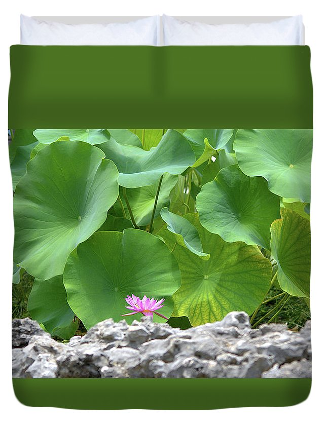 Roy Williams Duvet Cover featuring the photograph Light Purple Water Lily And Large Green Leaves by Roy Williams