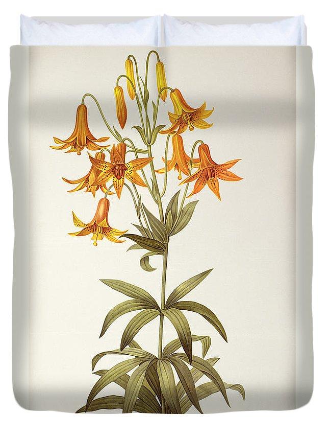 Lilium Penduliflorum Duvet Cover featuring the painting Lilium Penduliflorum by Pierre Joseph Redoute