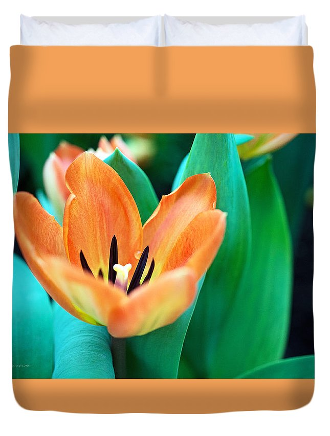 Lily Duvet Cover featuring the photograph Lily #4 by Edward Congdon