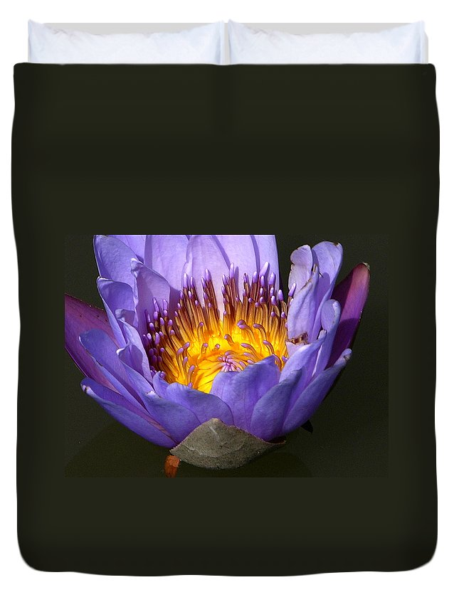 Purple And Gold Lily Duvet Cover featuring the photograph Lily Aglow by John Lautermilch