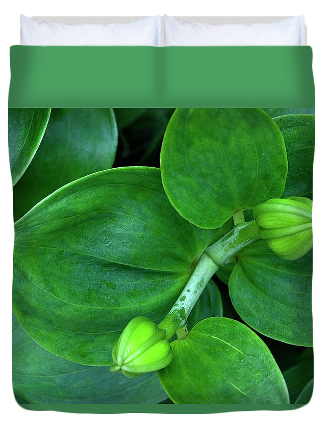Lily Duvet Cover featuring the photograph Lily Buds by George Sanquist