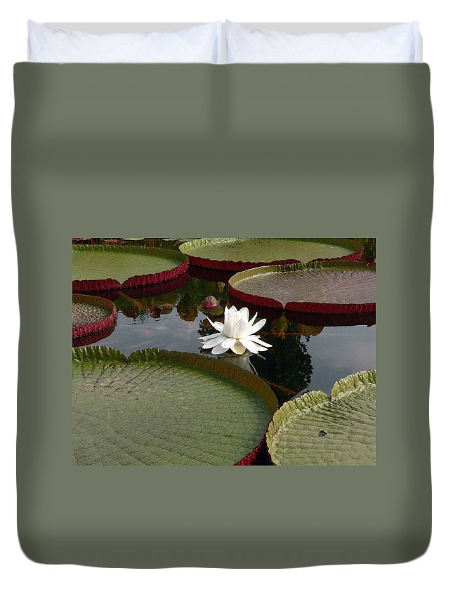 Water Lily Duvet Cover featuring the photograph Lily by David Bearden