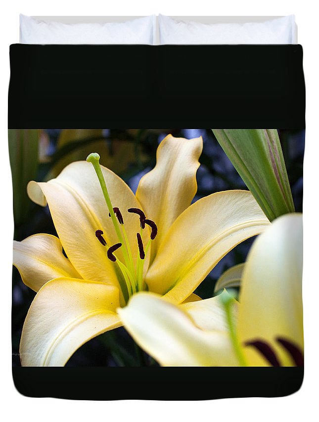 Lily Duvet Cover featuring the photograph Lily Splendor by Edward Congdon