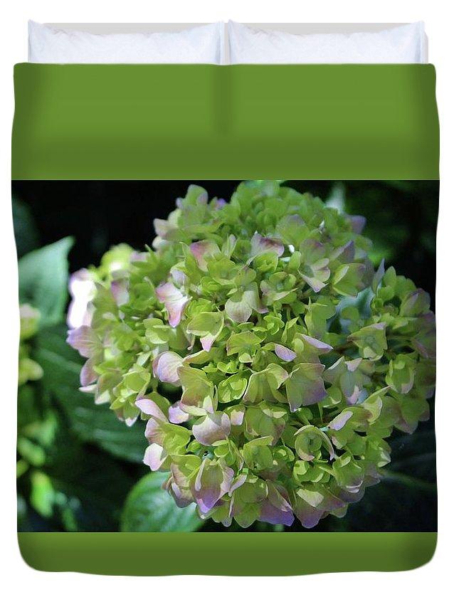 Hydrangea Duvet Cover featuring the photograph Lime-green Hydrangea by Cynthia Guinn