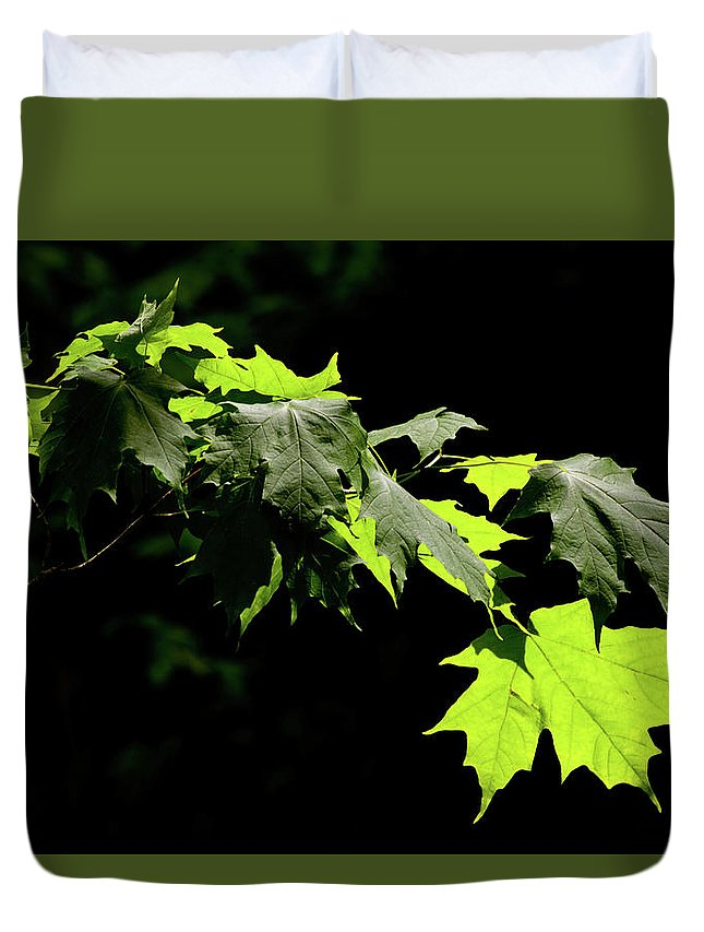 Summer Duvet Cover featuring the photograph Limelighted Maples by Irwin Barrett