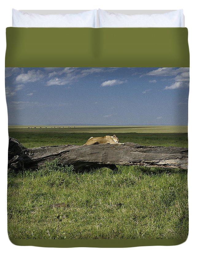 Africa Duvet Cover featuring the photograph Lion On A Log by Michele Burgess