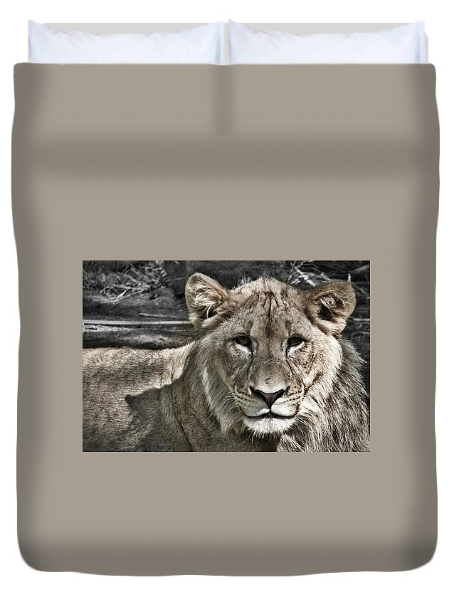 Lion Duvet Cover featuring the photograph Lion Portrait by Stuart Litoff