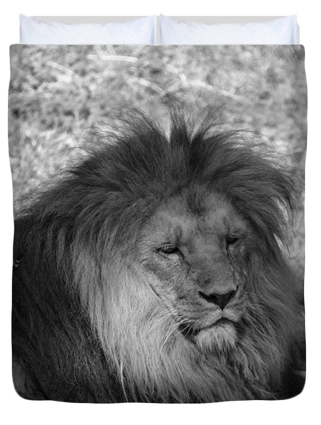 Lion Duvet Cover featuring the photograph Lion by Richard Hughes