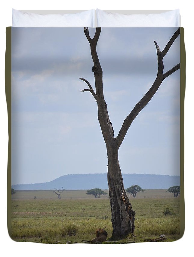 #wildlife #africa_lions #big_cats #bigcats #animals #lionesses Duvet Cover featuring the photograph Lion Under Tree by Sally Jones