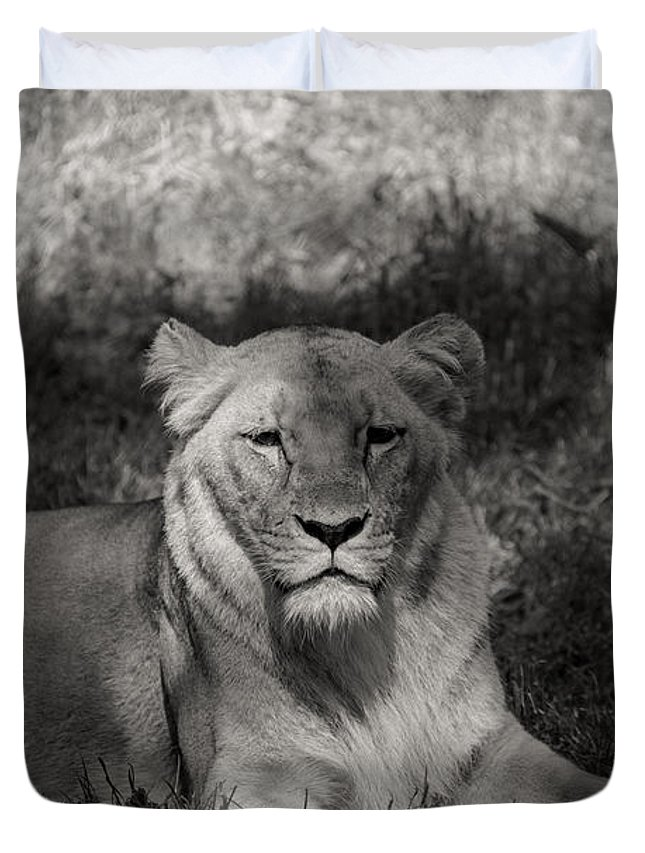 Lion Duvet Cover featuring the photograph Lioness by Richard Hughes