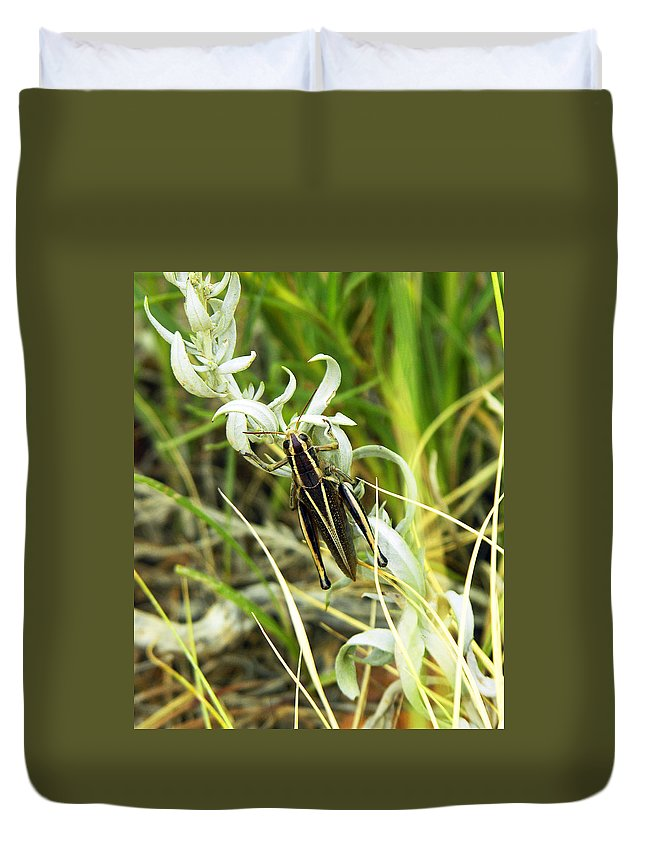 Grasshopper Duvet Cover featuring the photograph Little Grasshopper by Marilyn Hunt