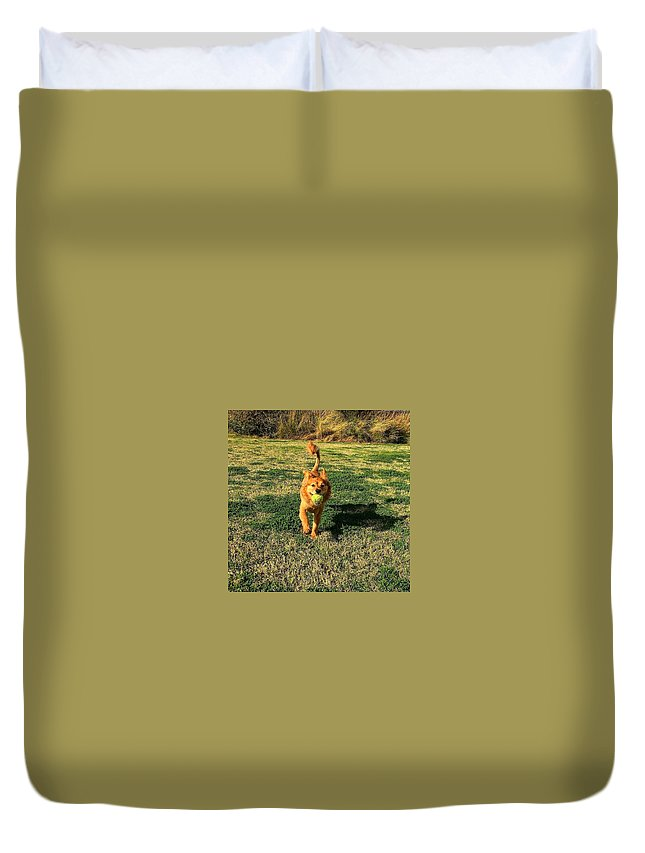 Lion Duvet Cover featuring the photograph Little Lion by Xavier Moran
