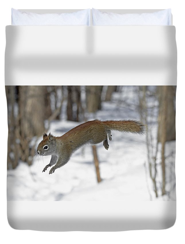Squirrel Duvet Cover featuring the photograph Little Monster by Asbed Iskedjian