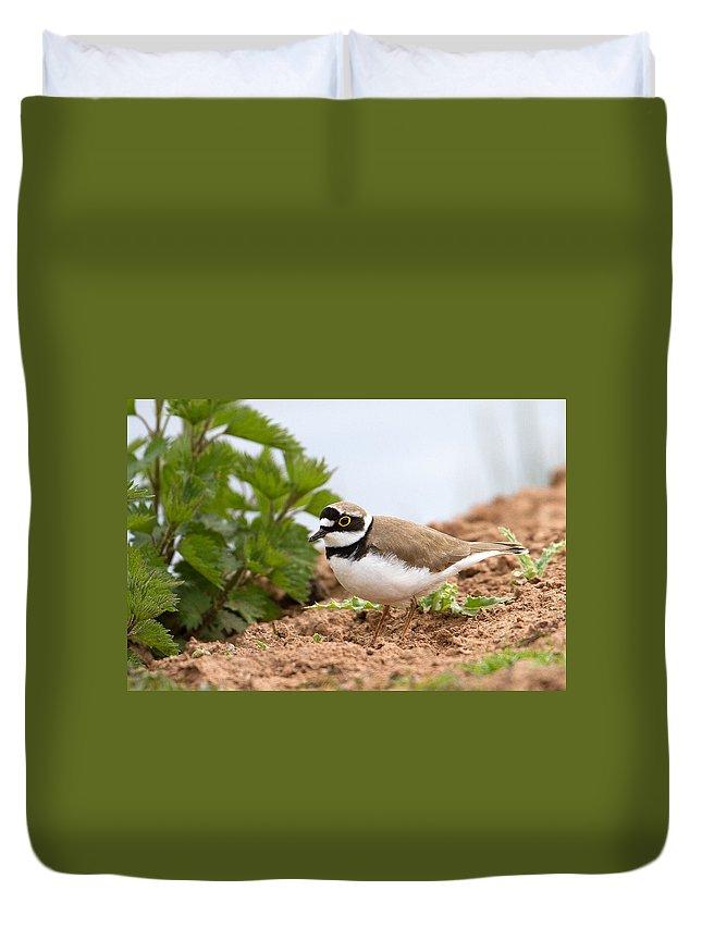 Little Ringed Plover.plover Duvet Cover featuring the photograph Little Ringed Plover by Bob Kemp