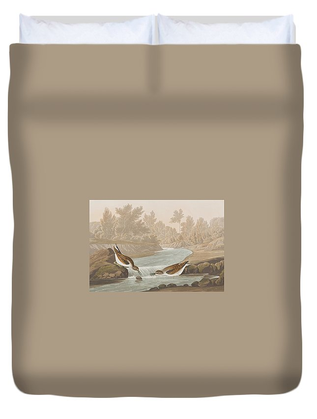 Sandpiper Duvet Cover featuring the painting Little Sandpiper by John James Audubon