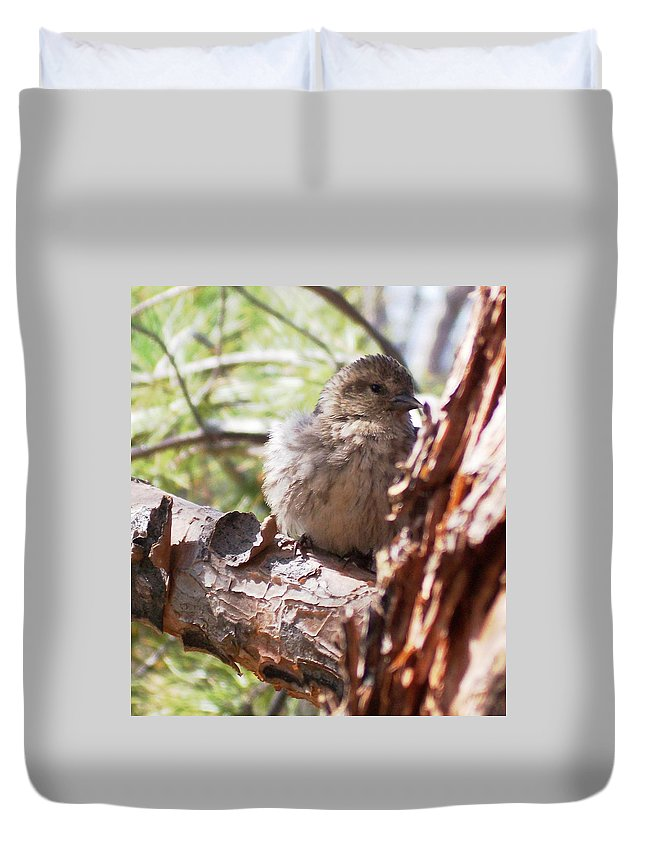 Baby Siskin Duvet Cover featuring the photograph Little Shy by Marika Evanson