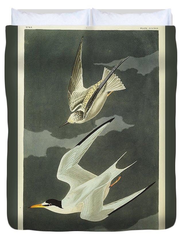 Lesser Tern. Lesser Tern. Little Tern (sterna Albifrons) From 'the Birds Of America' (aquatint & Engraving With Hand-colouring) By John James Audubon (1785-1851) Duvet Cover featuring the drawing Little Tern by John James Audubon