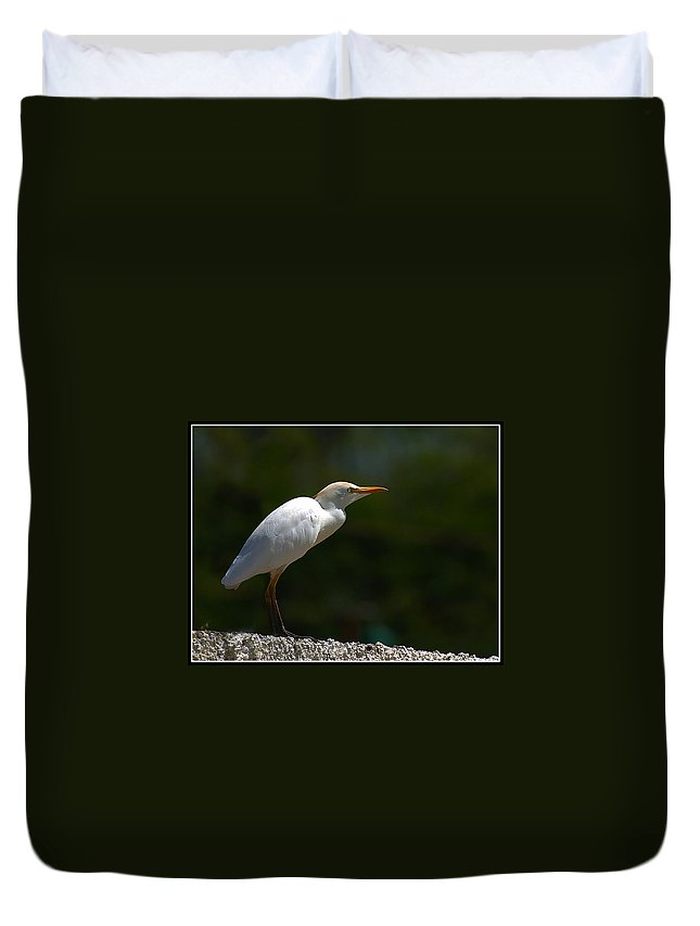 Little Duvet Cover featuring the photograph Little White Heron by Galeria Trompiz