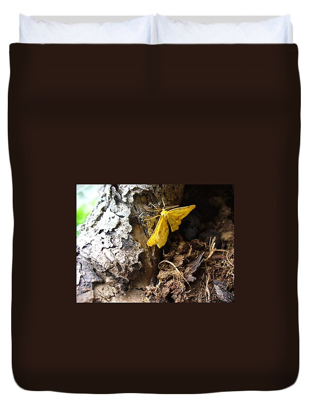 Insect Duvet Cover featuring the photograph Little Yellow Moth by Peggy King