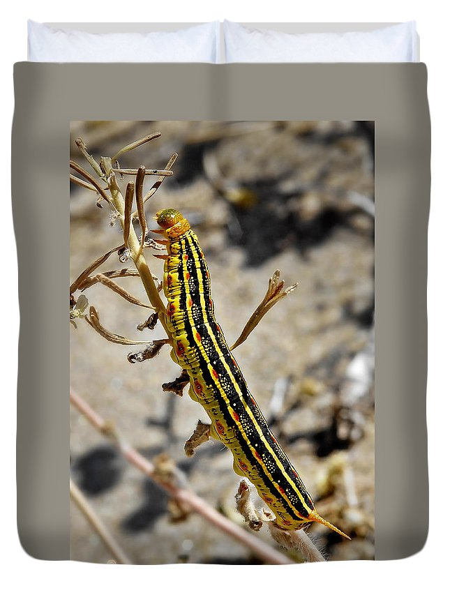 Caterpillar Duvet Cover featuring the photograph Living Desert by Christine Till