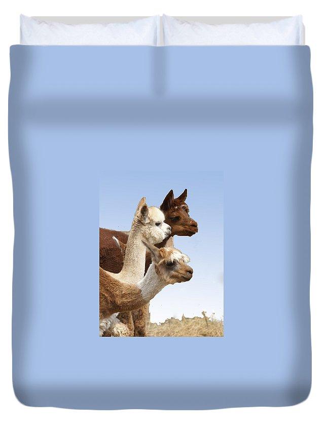 Llama Duvet Cover featuring the photograph Llama's Three by Heather Coen