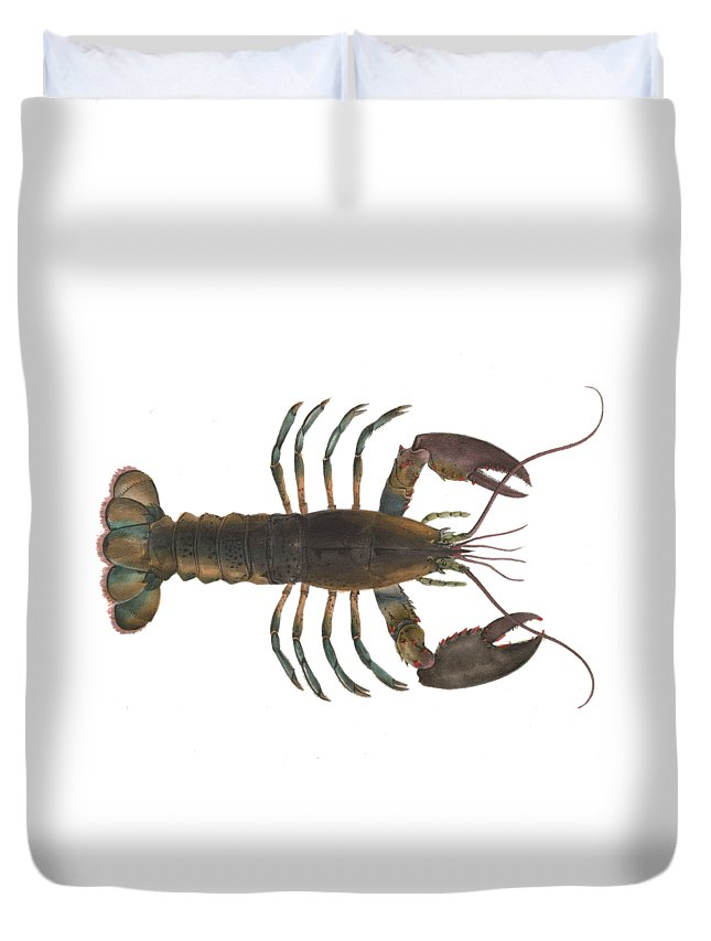 Lobster Duvet Cover featuring the digital art Lobster by Sarah Pierson